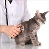 Ветеринарные клиники в Пировском
